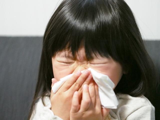 小児から使える舌下免疫療法シダキュア・ミティキュアに期待!子供の花粉症・ハウスダストの対策を考える