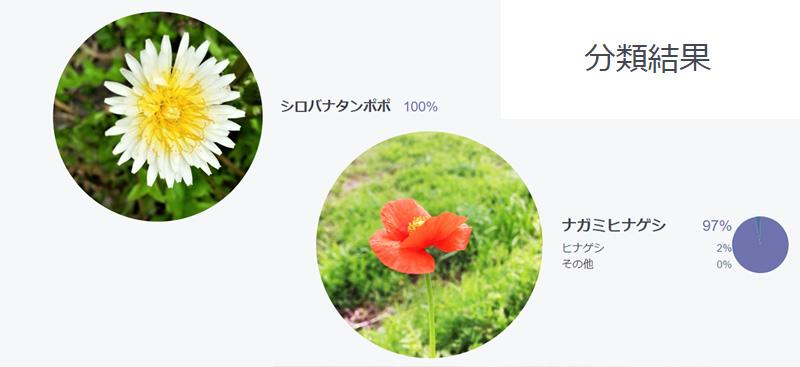 このお花のおなまえは?人工知能花分類システム「ハナノナ」。お散歩のお供におすすめ!